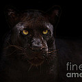 The Beauty Of Black by Ashley Vincent