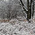 The Beauty Of Winter by Aimee L Maher Photography and Art Visit ALMGallerydotcom