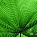 The Big Green Leaf by Natalie Kinnear