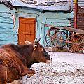 The Blue Barn