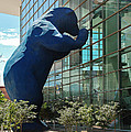 The Blue Bear  by Dany Lison