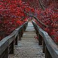 The Boardwalk by Douglas Barnard