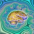 The Brain by Dennis D. Potokar