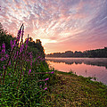 The Color Purple by Davorin Mance