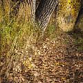 The Fall Way Home by Michael Van Beber