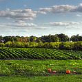 The Farm by Joann Vitali