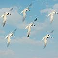 The Flight by Kim Hojnacki