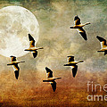 The Flight Of The Snow Geese by Lois Bryan