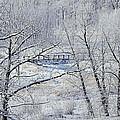 The Frozen Bridge by Maria Angelica Maira