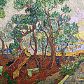 The Garden Of St Pauls Hospital At St. Remy by Vincent Van Gogh