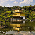 The Golden Pagoda in Kyoto Japan Print by David Smith