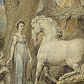 The Horse by William Blake