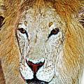 The King by Susan Leggett