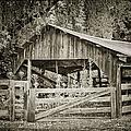 The Last Barn by Joan Carroll
