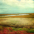 The Low Country by Amy Tyler
