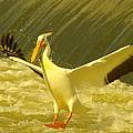 The Pelican Lands by Jeff Swan