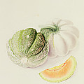 The Romana Melon by William Hooker