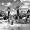 The Sandpiper Pool Bw Palm Desert by William Dey