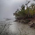 The Shining Mangrove by Kingshuk Mondal