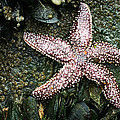 The Starfish  by JC Findley