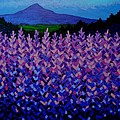 The Sugar Loaf - Wicklow - Ireland by John  Nolan