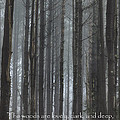 The Woods by Bill Wakeley