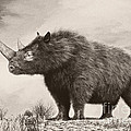 The Woolly Rhinoceros Is An Extinct by Philip Brownlow