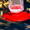 Three Humming Birds ...