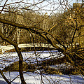 Through The Branches 2 - Central Park - Nyc by Madeline Ellis
