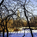 Through The Branches 3 - Central Park - Nyc by Madeline Ellis