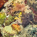 Tidal Pool Color by Debbie Green