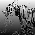 Tiger illustration d...