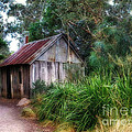 Timber Shack by Kaye Menner