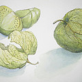 Tomatillos by Maria Hunt
