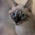 Tomcat by Priska Wettstein