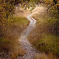 Trail Of Dreams by Michael Van Beber