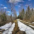 Trail Thaw by Gene Cyr