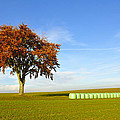 Tree And Hay Bales by Aged Pixel