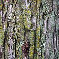 Tree Bark Detail Study by Design Turnpike