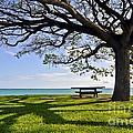 Tree Canopy by Gina Savage