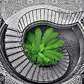 Tree Fern in the Stairs