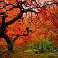 Tree Fire by Darren  White