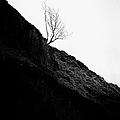 Tree In Mist II by John Farnan