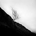 Tree In Mist by John Farnan
