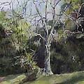 Tree by Janet Felts