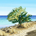Tree On The Beach by Veronica Minozzi