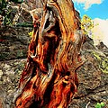 Tree Trunk Print by Kathleen Struckle