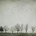 Trees And Birds by Diana Kraleva