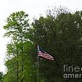 Trees And Flag by Joseph Baril