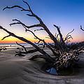 Trees At Driftwood Beach by Debra and Dave Vanderlaan